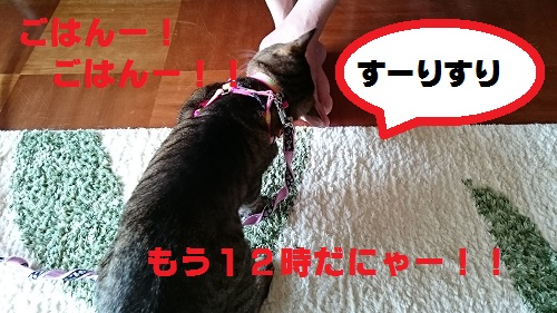 DSC_6869.jpg