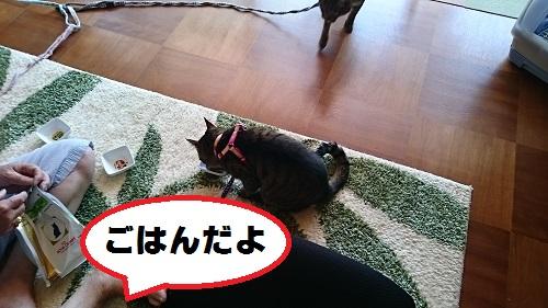 DSC_7121.jpg