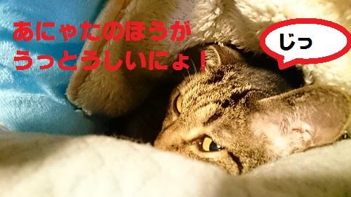 DSC_7393.jpg