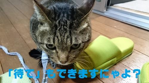 DSC_7591.jpg