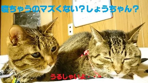 DSC_7912.jpg