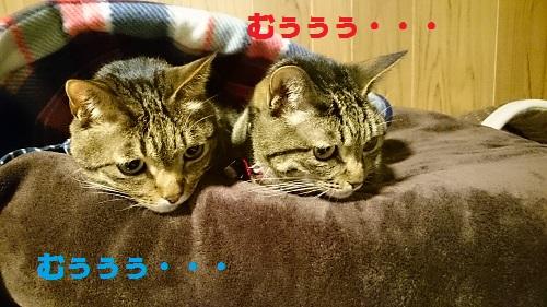 DSC_8057.jpg