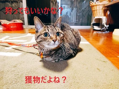 emono2.jpg